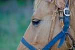 Finding The Perfect Equine Photographer