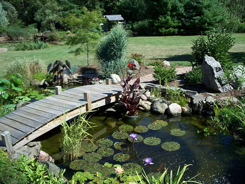6 Top Tips For A Beautiful Garden