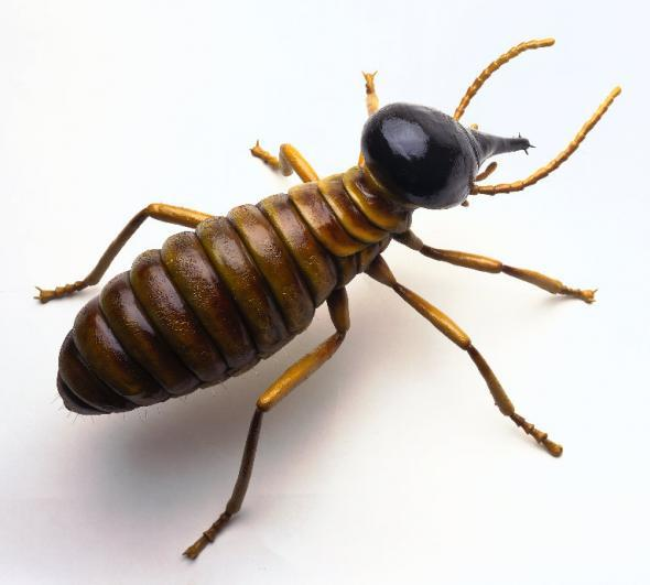 Pest Control Methods Homeowners Should Avoid