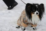 Tips To Protect Your Dog For The Winter Season