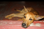 dog depression | caninine depression