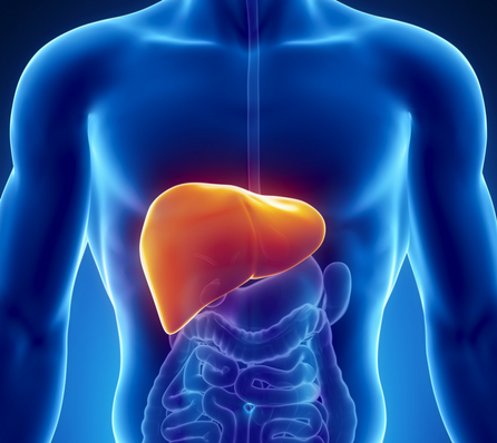 Guidelines To Keep Your Liver Healthy