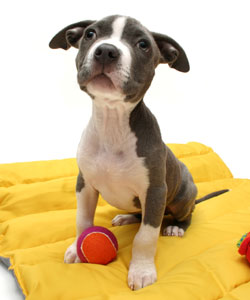 What To Buy When Shopping For Dog Equipment