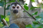 3 Rare Animals In Costa Rica Which Are Easy To Find