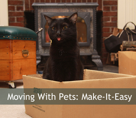 Pets On The Move: How To Make Your Pet Happy On Relocation