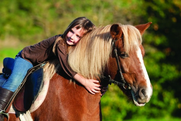 Horse Ownership - Things To Think About