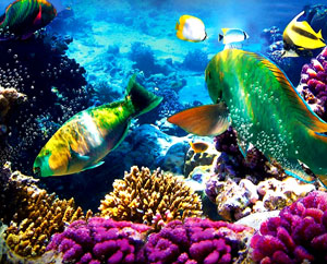 The Great Barrier Reef Can Be Rescued By Geotube Technology