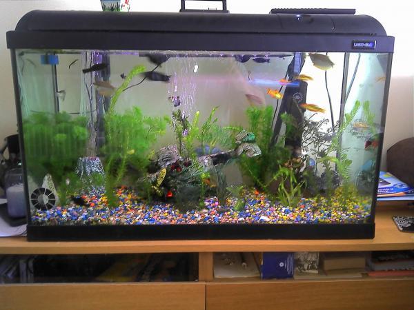 Setting Up A Tropical Aquarium - Beginners Tips