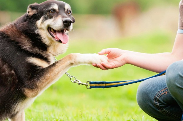 How Pets Help You Make A Healthy Lifestyle Change