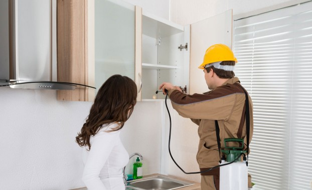 Risks Of Hiring An Inexperienced Pest Control Company In Islington