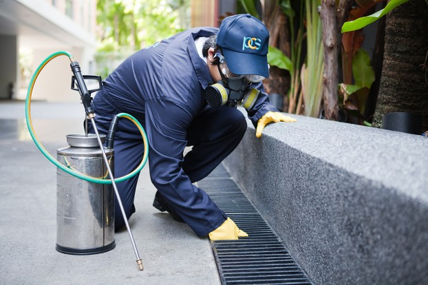 The Importance Of Professional Pest Control Services
