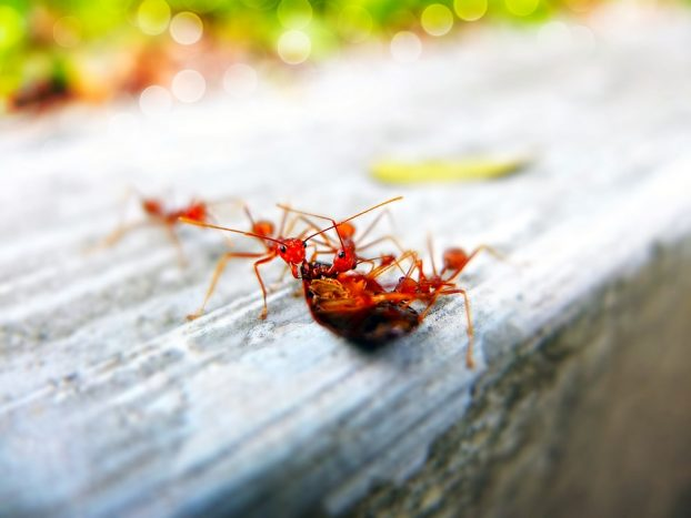 Common Pests You Might Find In Your Home