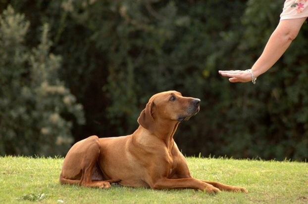 Need To Control Aggressive Dog